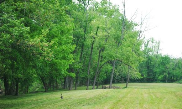 Goose and treeline