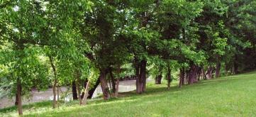 Section of river treeline